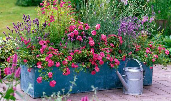 Pot Some Colourful Flowering Plants For Decoration