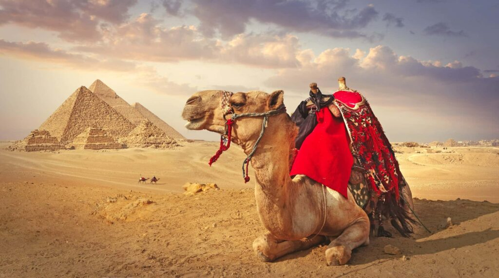 A picture containing text, sky, outdoor, camel  Description automatically generated