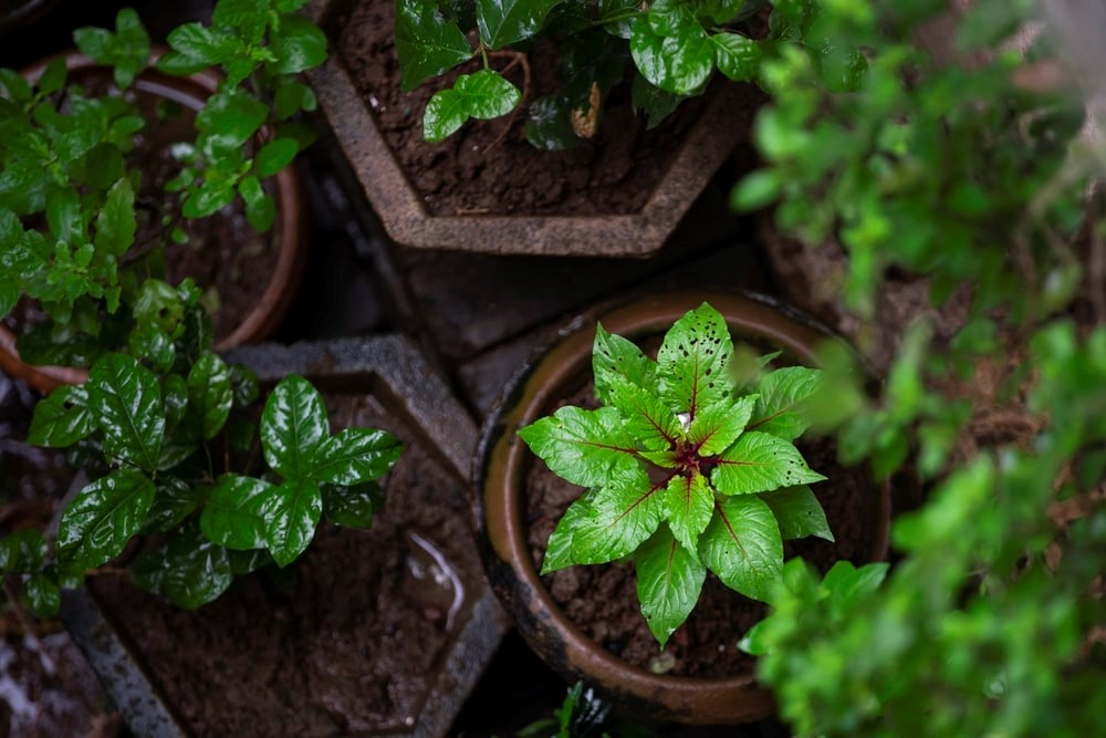 Garden Pests - Green plant on brown clay pot